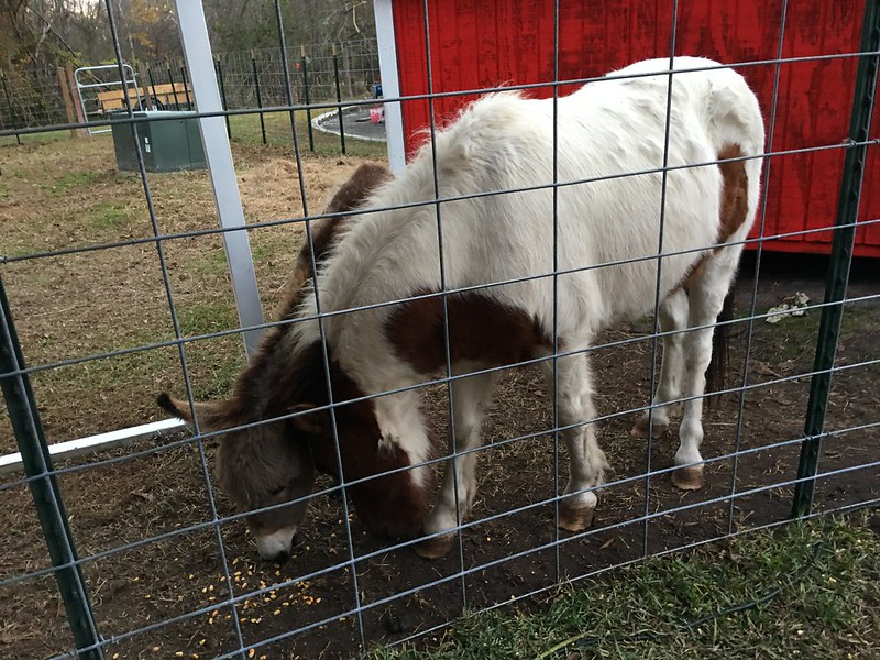 Donkey & Pony at Peach World