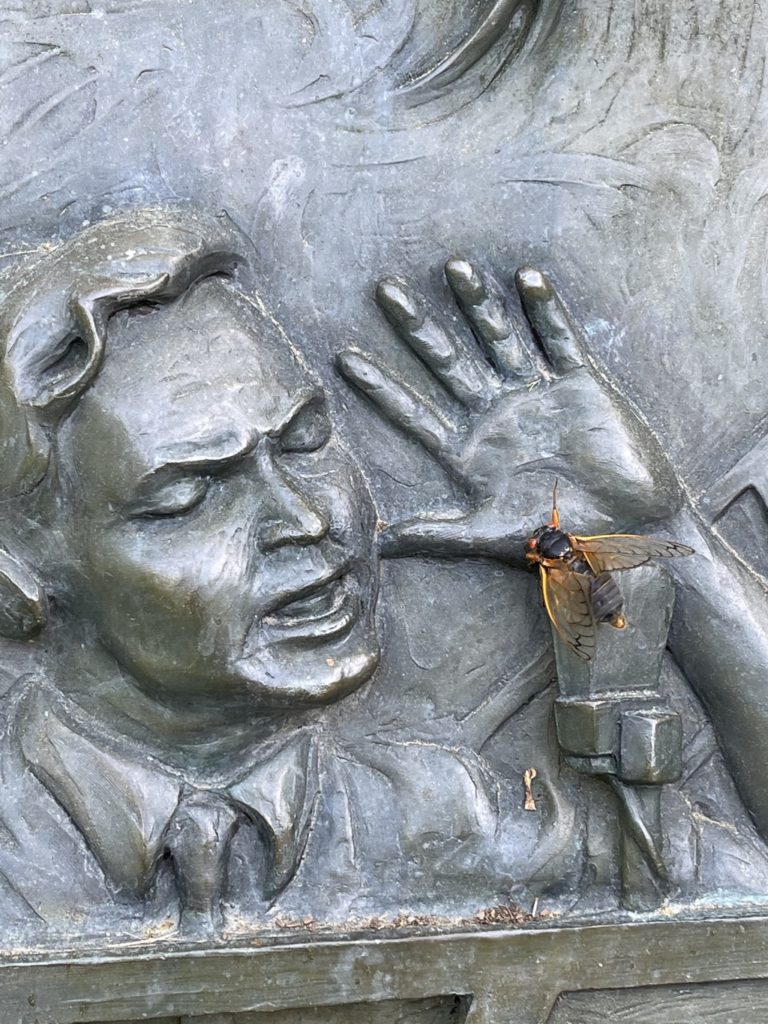 Cicada sharing the mic with Orson